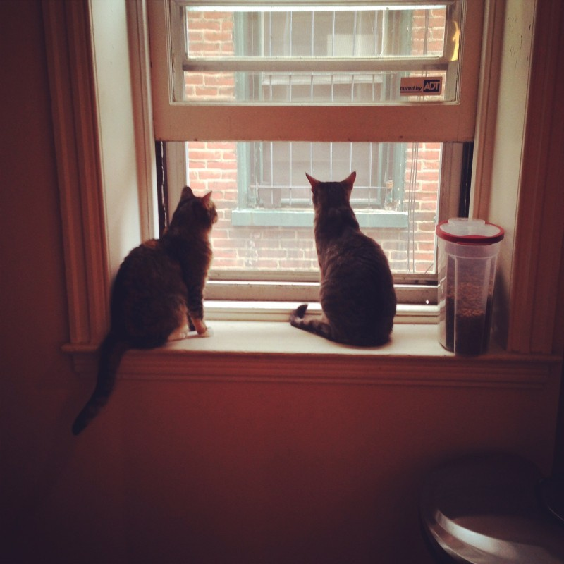Our Furry Friends The Cost Of Pet Ownership Part 1 Cats Buys With Friends