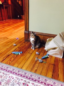 Toys don't have to be expensive to be fun for cats, these toys are all 50 cents to a $1 in cost
