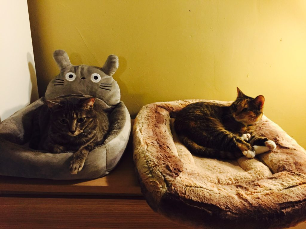 You can follow these two cats on Instagram