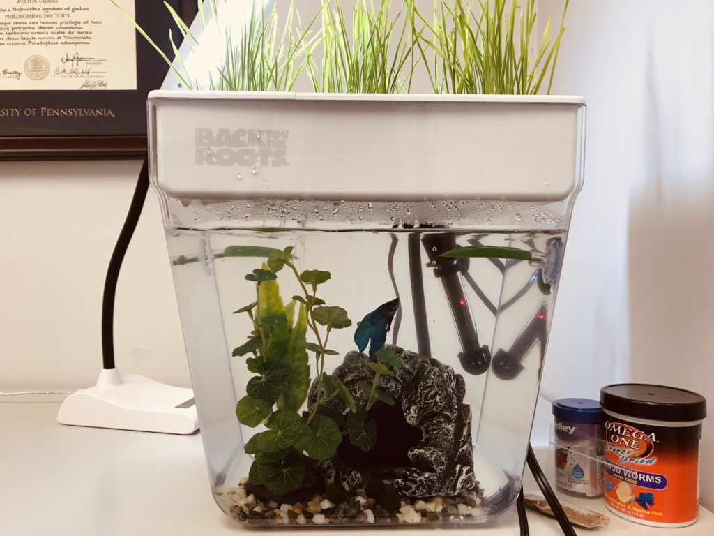An epic review of the back to the roots water garden fish - Back to the roots water garden review ...